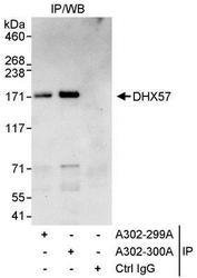NBP1-28693 - DHX57