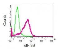 NBP1-96033 - EIF3B / EIF3S9
