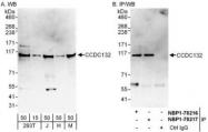 NBP1-78216 - CCDC132
