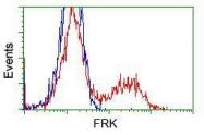 NBP1-47761 - FRK / PTK5