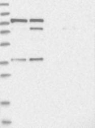 NBP1-83047 - FTSJD2