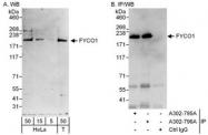 NBP1-47266 - FYCO1