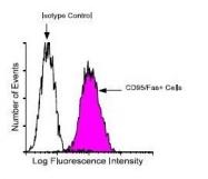 NBP1-28535 - CD95 / FAS