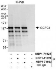 NBP1-71923 - GCFC