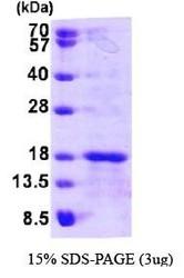NBP1-44471 - GLRX5