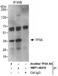 NBP1-46216 - GTF2A1 / TF2A1