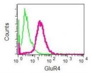 NBP1-95770 - Glutamate receptor 4 / GLUR4