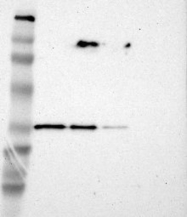 NBP1-86577 - HCCS / CCHL