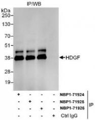 NBP1-71924 - HDGF