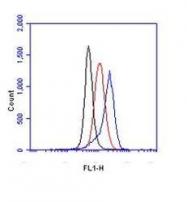 NB100-449 - HIF1A / HIF1 alpha