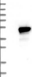 NBP1-87329 - HMBS