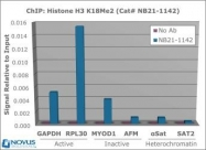 NB21-1142 - Histone H3.2