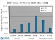 NB21-1252 - Histone H3.2