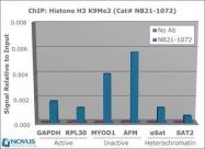 NB21-1072 - Histone H3.2