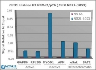 NB21-1053 - Histone H3.2
