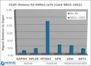 NB21-1052 - Histone H3.2