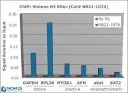 NB21-1074 - Histone H3.2
