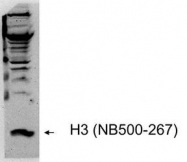 NB500-267 - Histone H3