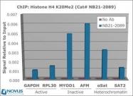 NB21-2089 - Histone H4