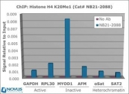 NB21-2088 - Histone H4