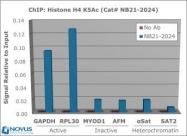NB21-2024 - Histone H4