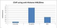 NBP1-30091 - Histone H4