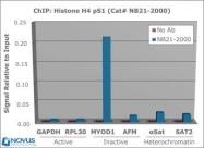 NB21-2000 - Histone H4