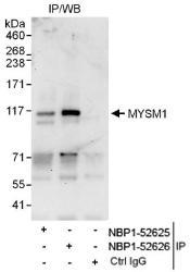 NBP1-52626 - MYSM1