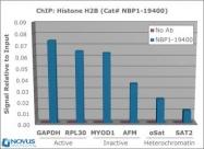 NBP1-19400 - Histone H2B