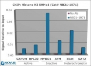 NB21-1071 - Histone H3.2