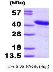 NBP1-44481 - HSPBP1