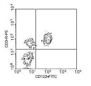 NBP1-28175 - CD122 / IL2RB