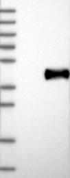 NBP1-85455 - IL22RA2