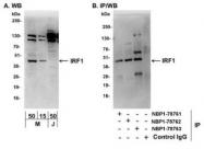 NBP1-78763 - IRF1