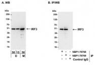 NBP1-78769 - IRF3