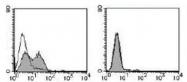 NBP1-54412 - Integrin alpha-7 / ITGA7