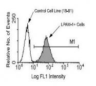 NBP1-28150 - Integrin alpha 4 beta 7