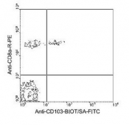 NBP1-28126 - CD103