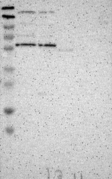 NBP1-86104 - KIAA0494
