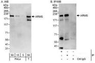 NBP1-50034 - ARMS / KIDINS220