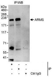 NBP1-50035 - ARMS / KIDINS220