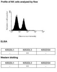 NBP1-04316 - CD158b / KIR2DL3