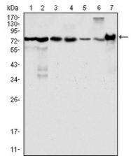 NBP1-47516 - LPP