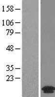 NBL1-12839 - MANBAL Lysate