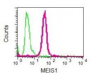 NBP1-95898 - MEIS1