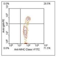 NBP1-28306 - MHC Class I