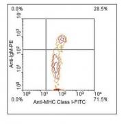 NBP1-28304 - MHC Class I