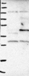 NBP1-86788 - MRPS22