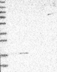 NBP1-92140 - MRPS24