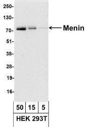 NBP1-71794 - Menin